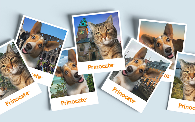 Visual Identity for Prinocate-5
